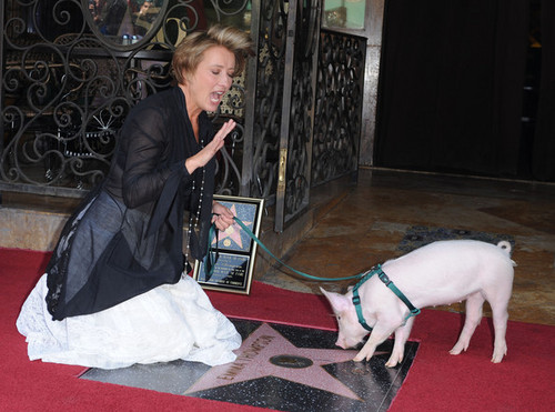Emma Thompson wallpaper possibly with a lippizan and a street called Emma Thompson Gets a Star on the Walk of Fame