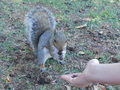 Feeding a friendly Squirrel - squirrels photo