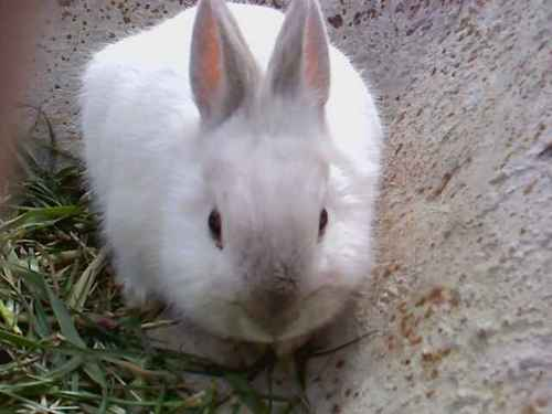 My cute rabbit (L)