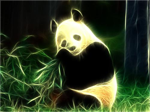 Pandas wallpaper entitled Pandas