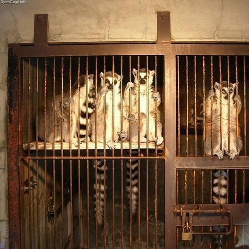 Poor Lemurs!
