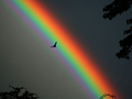 Rainbows - rainbows photo