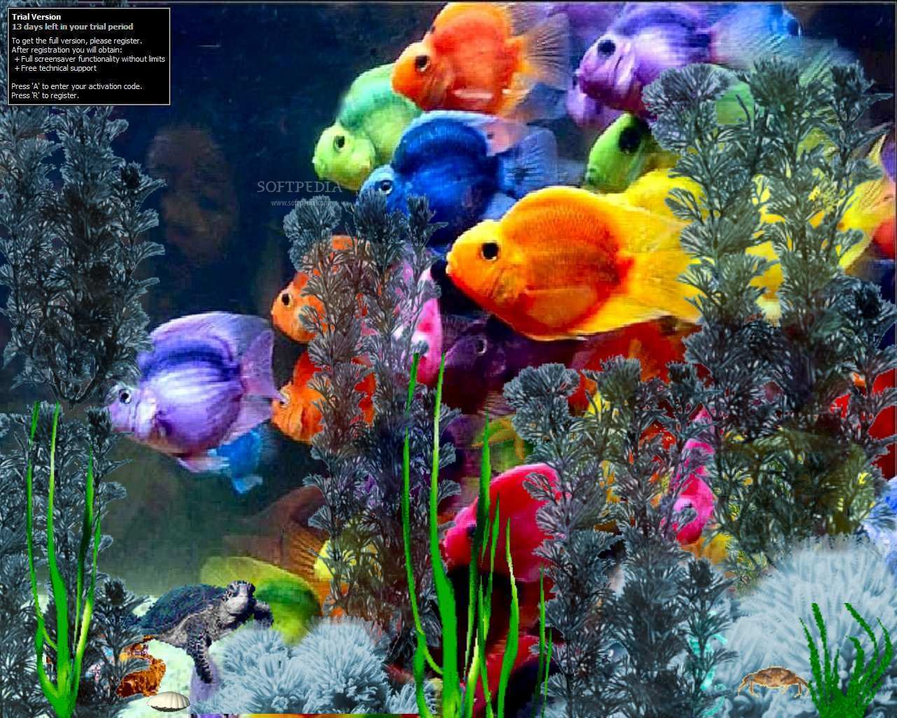 Rainbows images rainbows hd wallpaper and background for Tropical rainbow fish