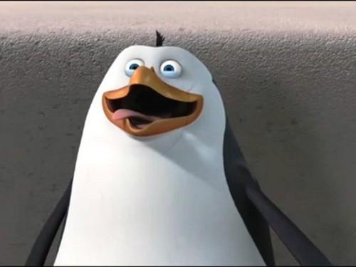 Rico The pingüino, pingüino de