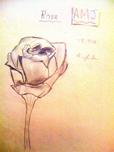 Rose drawing - roses Photo