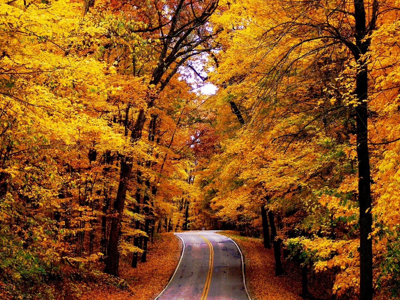 The Road - Autumn Wall...