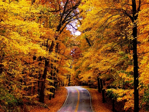 The Road - autumn Wallpaper