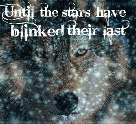 chó sói, sói In Stars