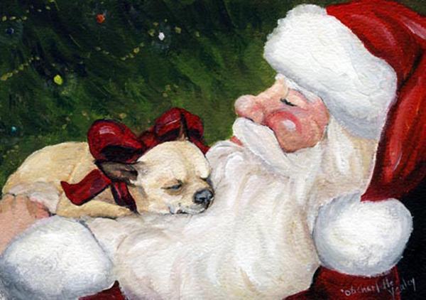 A Chihuahuas cozy christmas