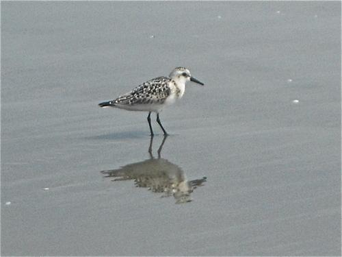 Bird walking on the seashore
