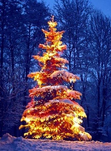 क्रिस्मस Time