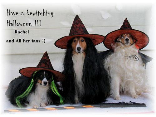 Happy Halloween to Rachel and all her Fans :)