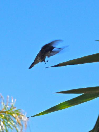 kolibri flying to a baum