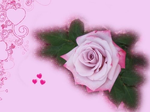 Roses wallpaper containing a rose, a bouquet, and a red cabbage titled Pretty