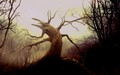 sleepy-hollow - Sleepy Hollow wallpaper