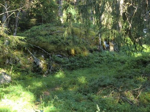 Swedish Nature