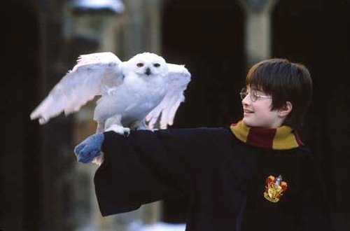 harry and hedwig first year - harry-potter-movies Photo