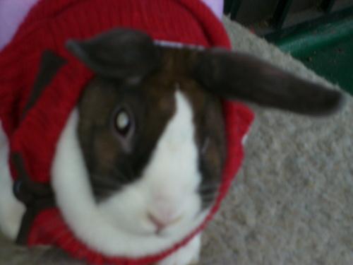this is my rabbit :)