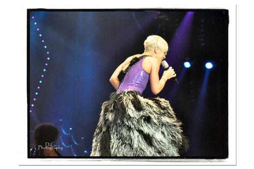 Adelaide merah jambu konsert