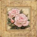 Beautiful ピンク rose for a Beautiful Princess