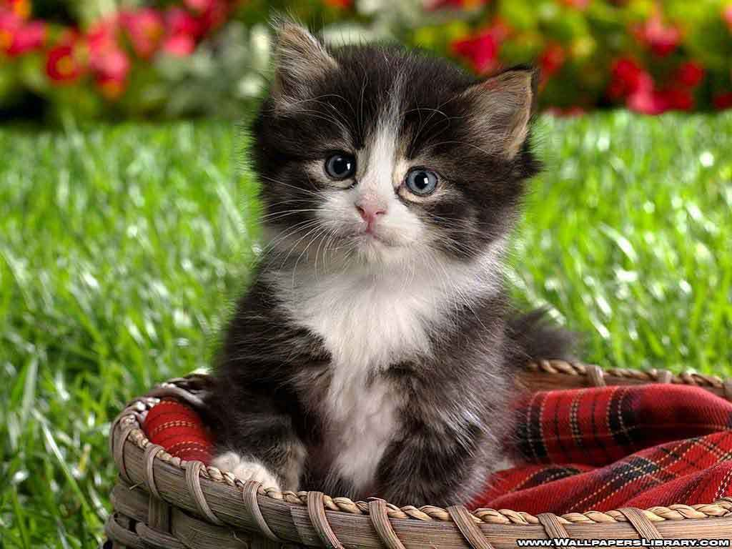 Babies Pets and Animals Cute kitten