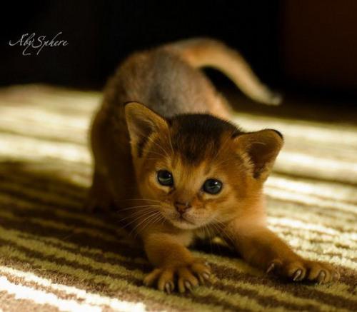 Cute little kitties