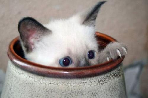 Cute little kitties :)