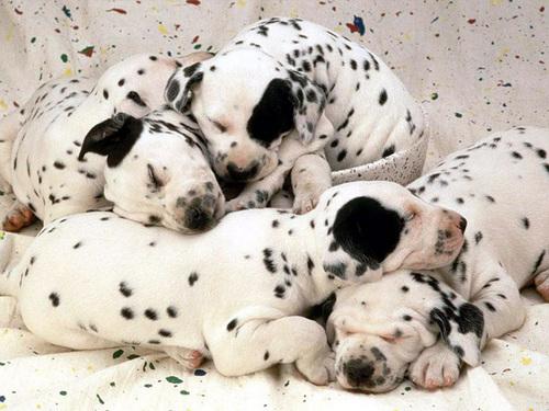 Cute पिल्लें to adopt!