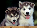 Cute puppies to adopt!