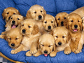 Cute puppies to adopt! - teddybear64 photo