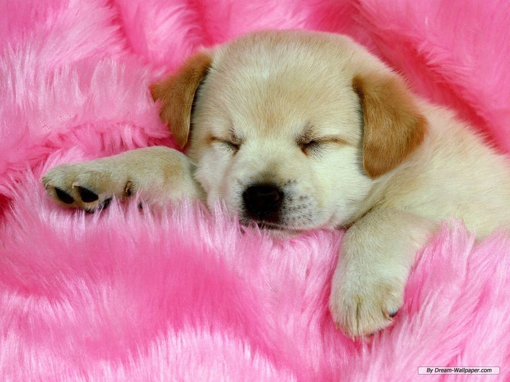 puppy dog wallpaper - photo #11