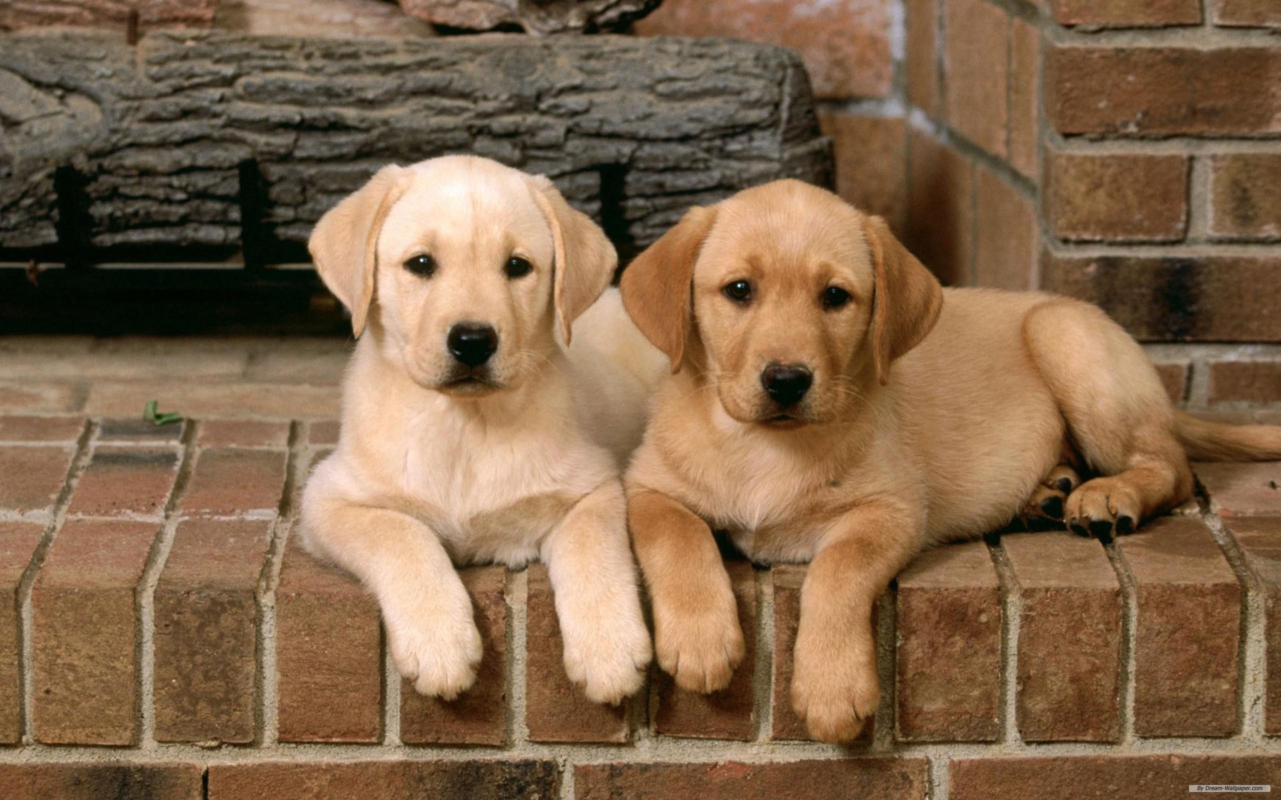 Dogs - Dogs Wallpaper (16761952) - Fanpop: www.fanpop.com/clubs/dogs/images/16761952/title/dogs-wallpaper