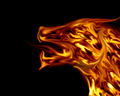 funkyrach01 - Fire Dragon wallpaper
