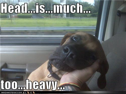 Funny Dog Pics
