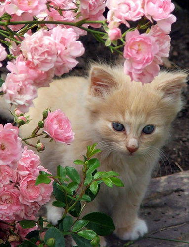 Kitten in the お花 :)