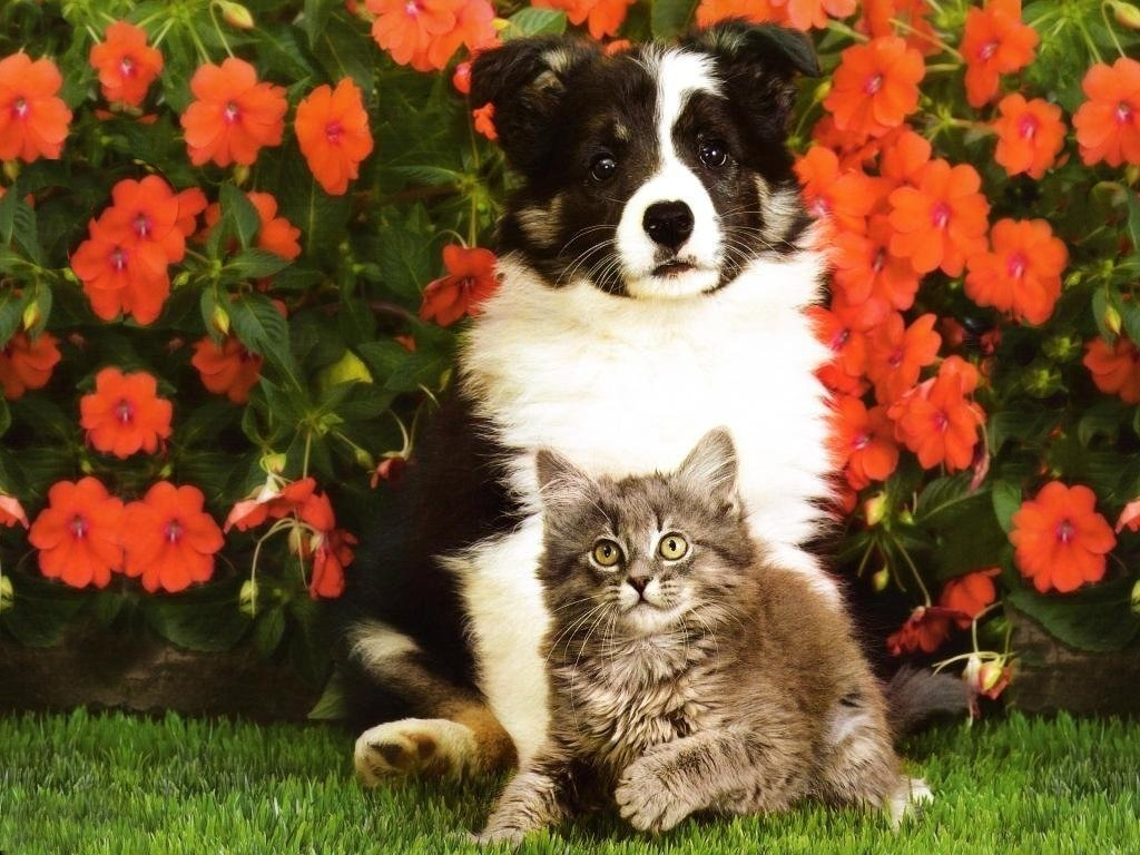 Free Kitten And Puppy Wallpaper High Quality « Long