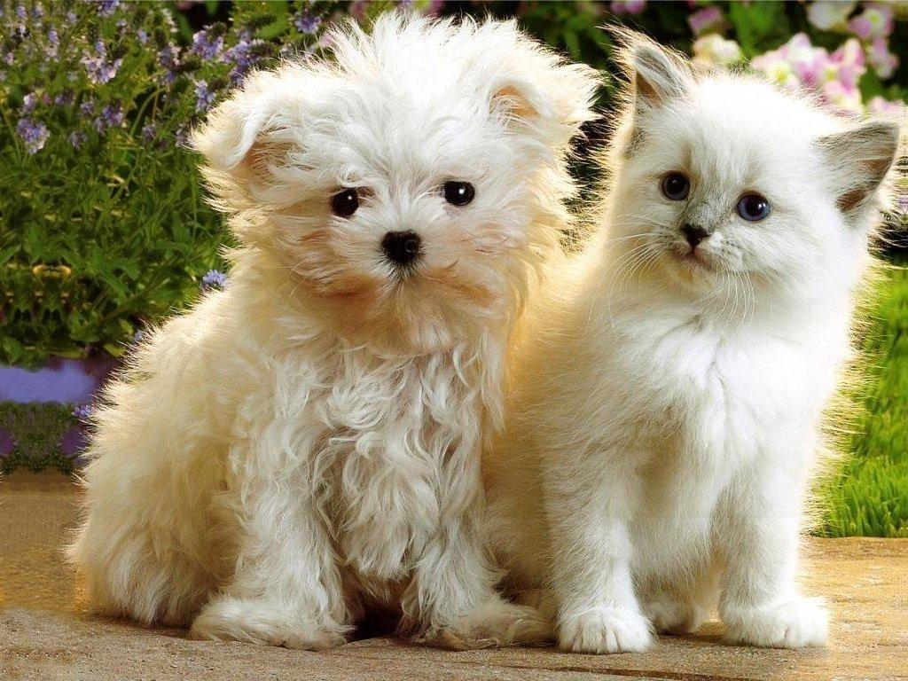 kittens puppies teddybear64 wallpaper 16751391 fanpop