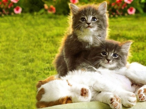 chatons & chiots