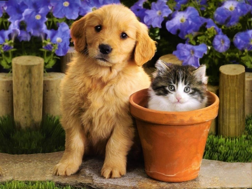 Cute Puppies And Kittens Wallpaper: Teddybear64 Wallpaper (16751401)