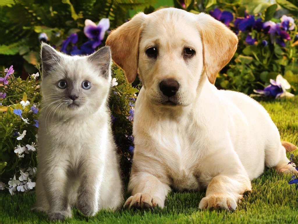 Kittens And Puppies Animals 2016