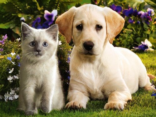 बिल्ली के बच्चे & पिल्लें