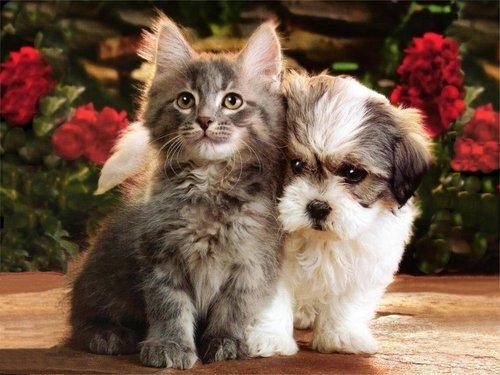 kittens & anak anjing