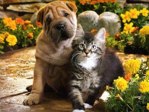 Kätzchen & Welpen