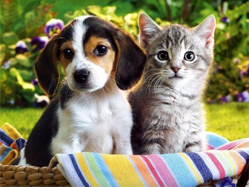 Kittens & Puppies