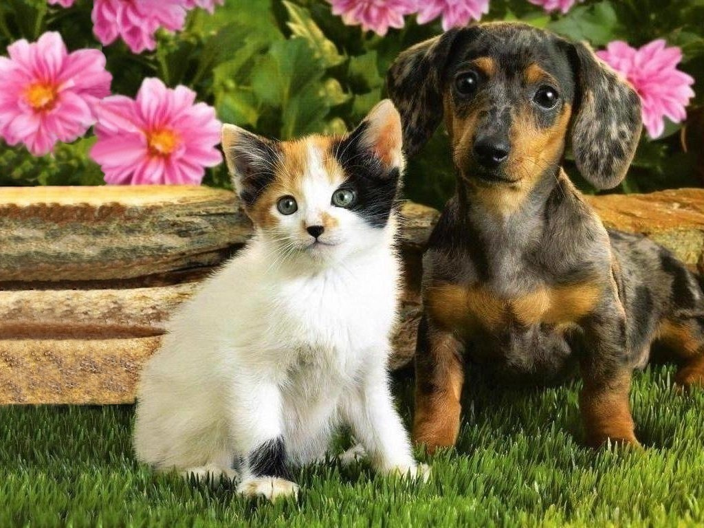 Cute Puppy And Kitten Wallpaper