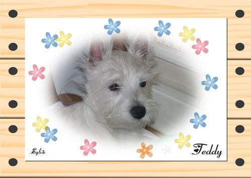 Lovely Teddy