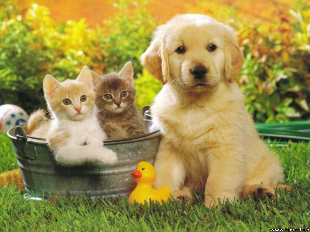 Lovely babies -... Pets