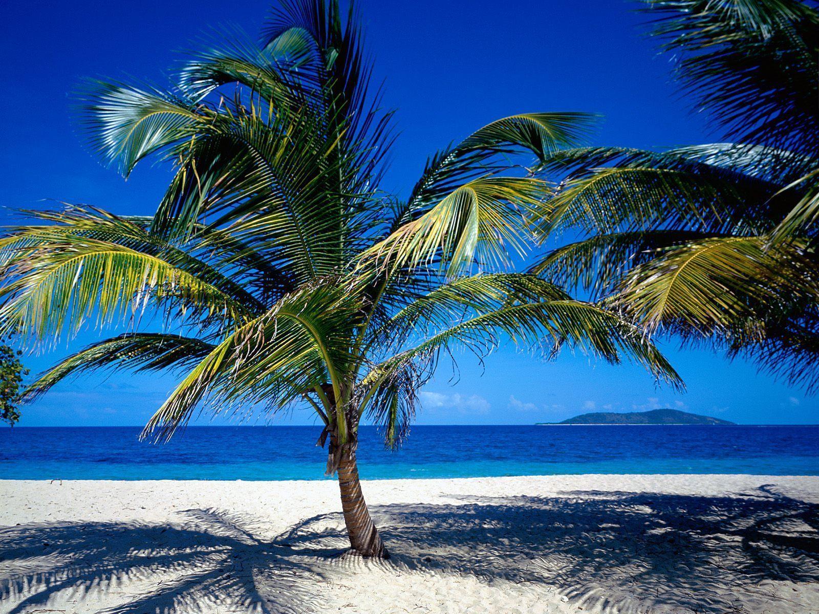 natural beach pretty wallpaper - photo #6