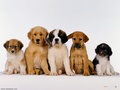 Puppies - babies-pets-and-animals wallpaper