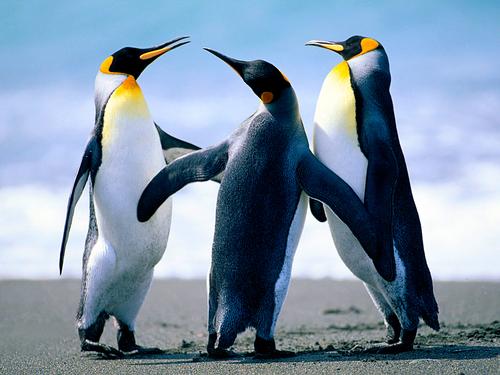 Random Penguins